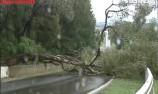 Gum tree on track stops Bathurst 12 Hour